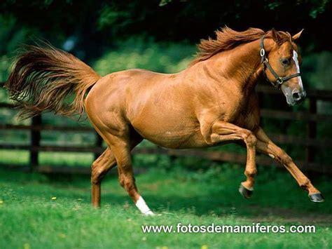 imagenes de animales wikipedia diegoandres animales de granja