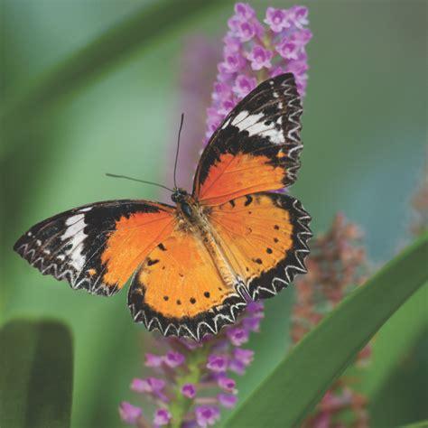 the annual fred dorothy fichter butterflies are blooming