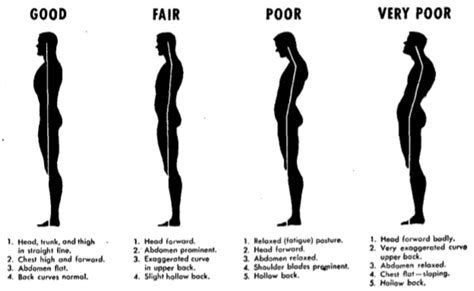 exercises for posture the stand program for better health through posture books improving your posture the of manliness