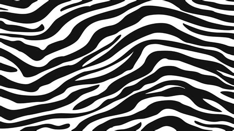 layout zebra zebra skin www pixshark com images galleries with a bite