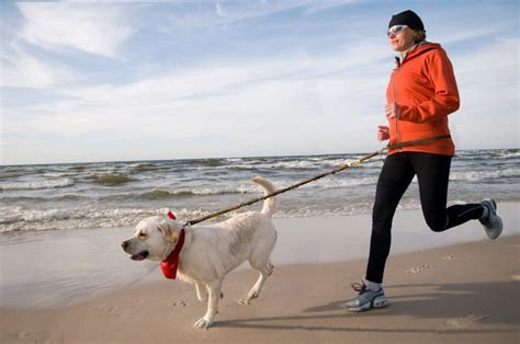 best leash for running best leash for running free the effect