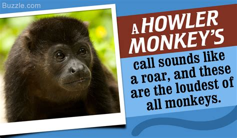 new year facts about the monkey astounding facts about howler monkeys