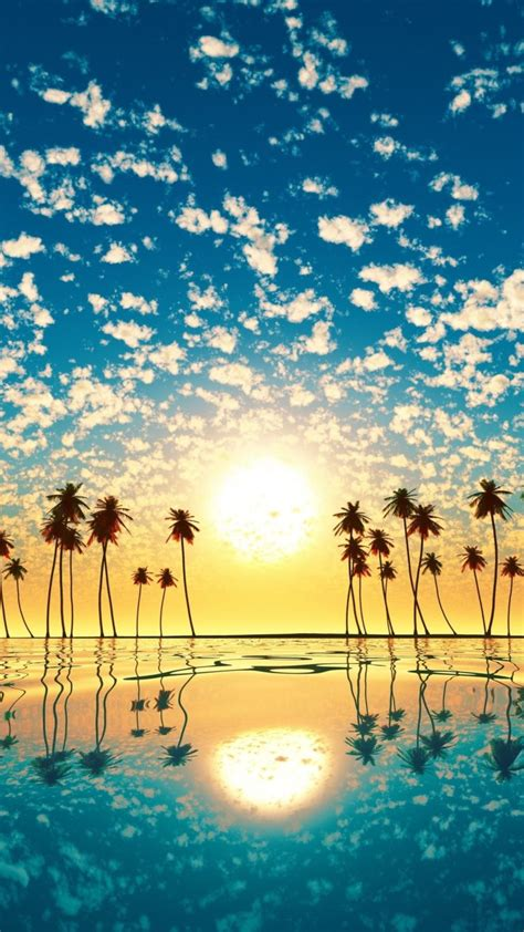 palm trees reflection sunset cd wallpaper