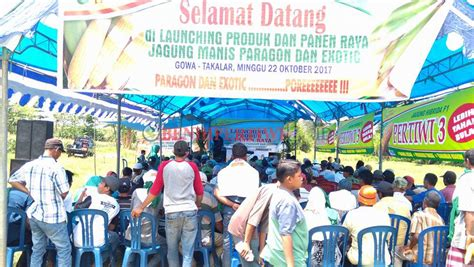Benih Jagung Manis Paragon launching paragon takalar benih pertiwi