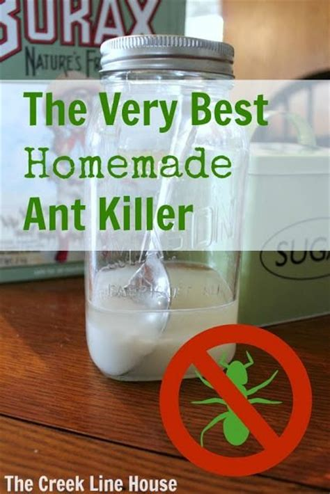 the best diy ant killer to