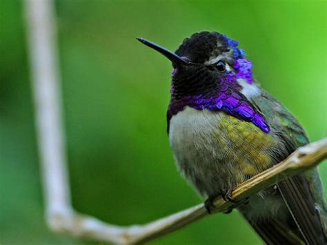 fun and amazing facts about hummingbirds for kids