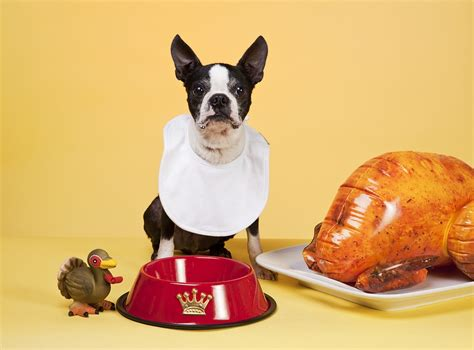 eats turkey can dogs eat turkey thanksgiving faqs fetch pet care