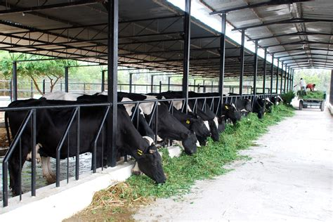 dairy farm equipment to lend you the best support in dairy