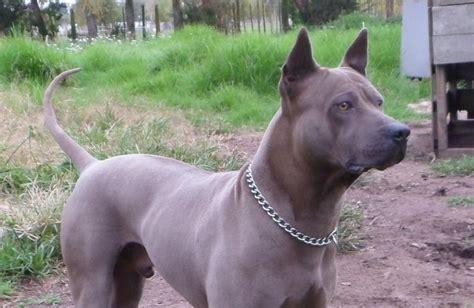 southern comfort kennel dog gone kennels dog kennels