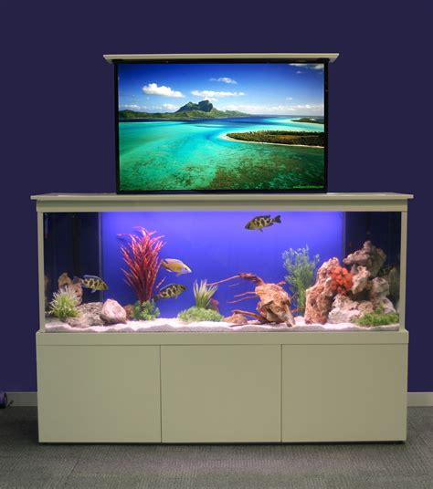 Tv Aquarium innovative fish tank fresh design