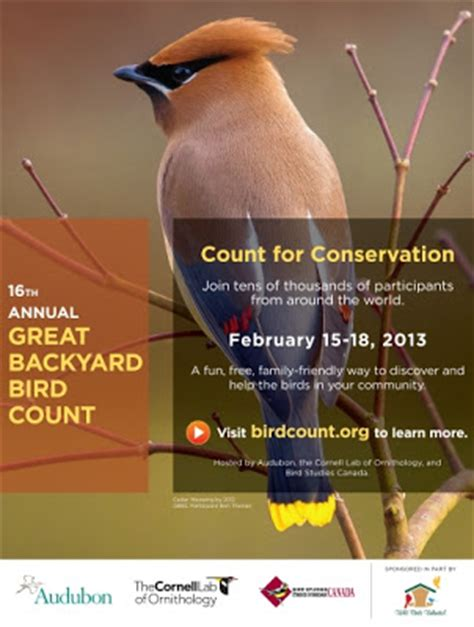 the great backyard bird count wild birds unlimited everyone can participate in the