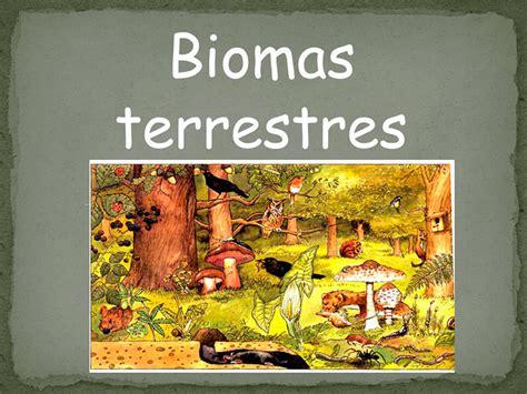 que son los biomas 191 qu 233 son los biomas teorema ambiental