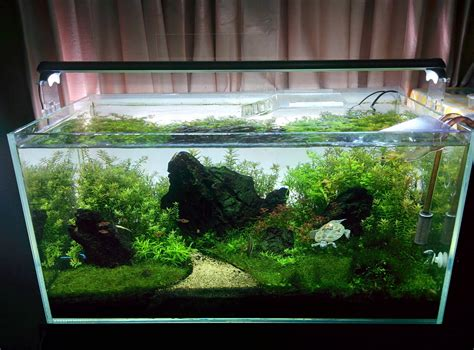 Penyubur Aquascape Co2 By Nd Pets high tech turtle tank 56k the planted tank forum