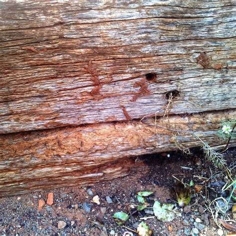 Landscape Timbers Termites Signs To Look For Mudding On Landscaping Timbers The