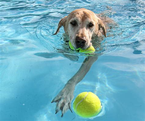water for dogs dogs and water water safety tips