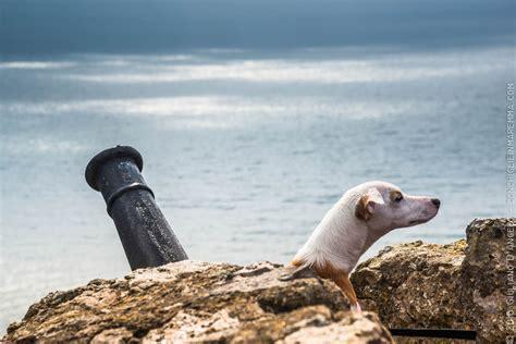 tempo porto ercole cani e cannoni conchiglie in maremma