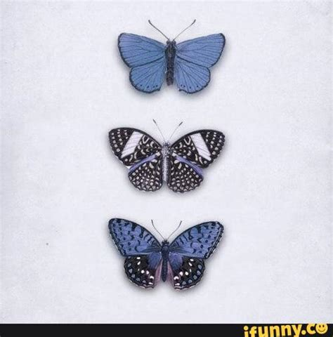 blue aesthetic butterflies