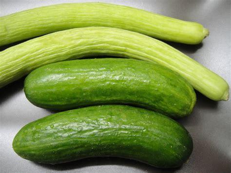 two varieties of cucumber sangaaa s blog