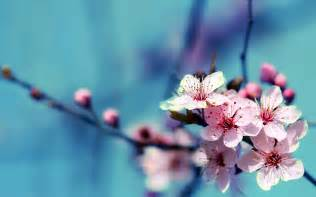 wallpaper with flowers 40 beautiful flower wallpapers free to download