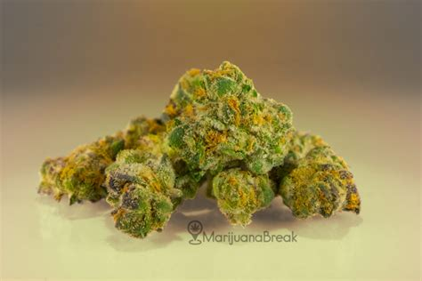 Do Dispensaries Sell Detoxes by Scout Cookies Strain 2018 Review