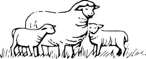Sheep In Field Clip Art at Clker.com - vector clip art ... Lamb Black And White Clipart