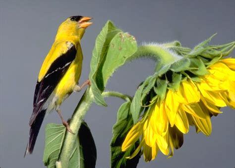 animals unique the bright yellow