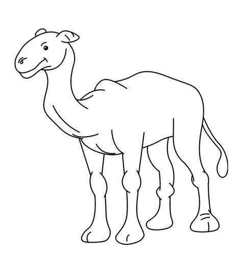 Free Camel Coloring Pages Camels Coloring Pages