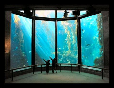 Cheap Mba In Bay Area by 85 Best Things To Do In Monterey Images On