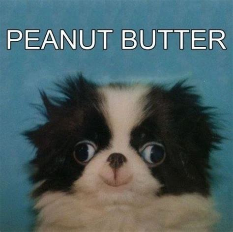 puppies and peanut butter peanut butter derp weknowmemes
