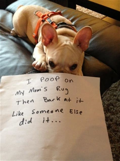 poopy puppy 15 adorably hilarious shaming photos poopy guff