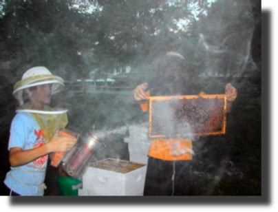 backyard beekeepers association beekeeping for beginners class starts this saturday
