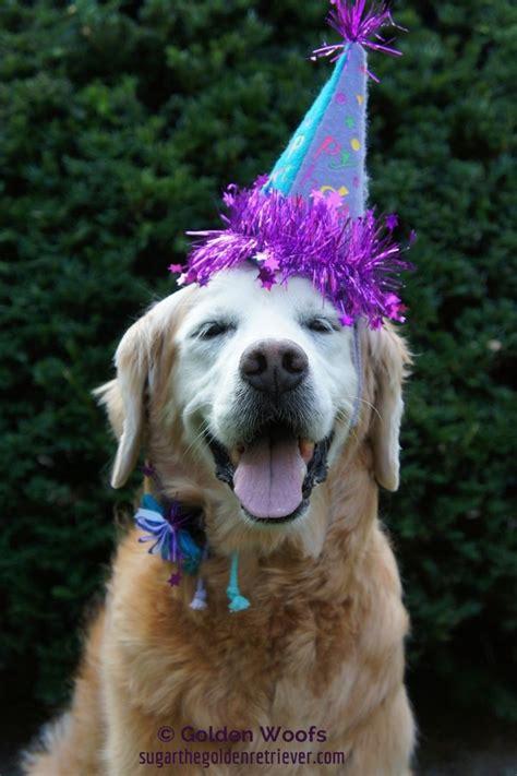 golden retriever birthday ecard 41 best images about golden retriever birthdays on the golden birthday