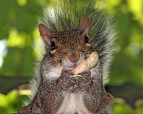 squirrel eating nuts squirrel imageeasy science for kids