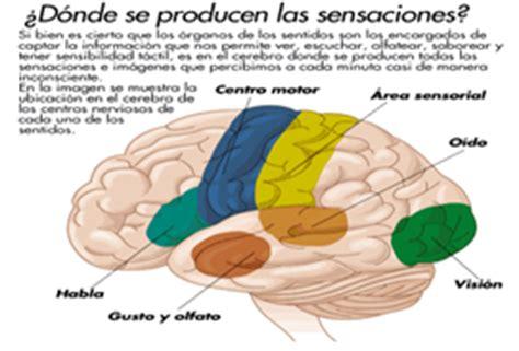 imagenes sensoriales sonoras los sentidos auditivo visual gustativo olfativo y