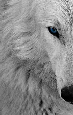 The White wolf with the blue eyes - xX Wolfie Xx - Wattpad