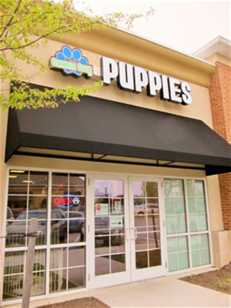 puppy stores in maryland columbia upscale puppy store pet store howard county baltimore md