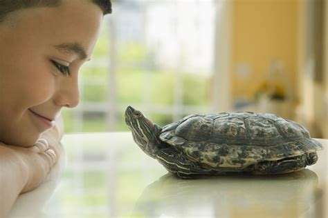 Peliharaan Anakan Kura Kura Baby Turtle pet turtles and salmonella infection in children