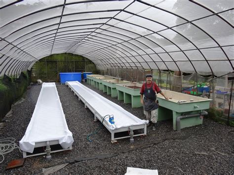 Green House Plans by Aquaponics How To