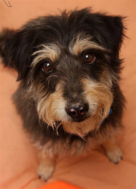best friends animal society best friends animal society to merge with atlanta pet