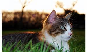 cat lying on grass wallpapers 1280x768 258176
