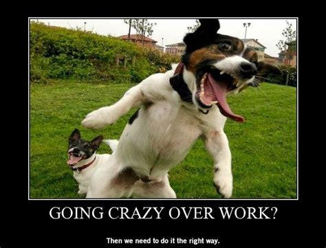 going crazy going crazy over work lagag fun pinterest