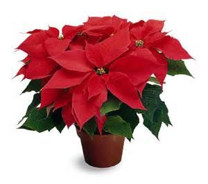 christmas mains florist happenings