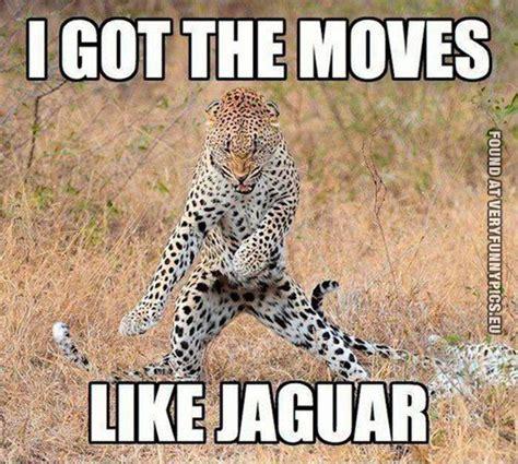 this jaguar got the pics