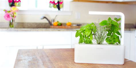 click and grow smart herb garden w l 3 refills basil the new click grow herb garden does everything but