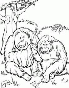 free zoo animal coloring pages free printable zoo coloring pages for