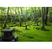 Trip To Japan Day 10 Arashiyama Kyoto