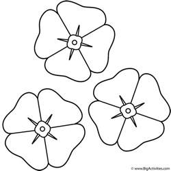 Poppy Template For Children by Poppies Coloring Page Remembrance Day