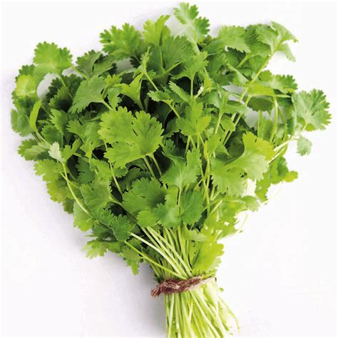 Vege Herbal herb plant coriander all vegetable plants vegetable plants vegetables garden dobies
