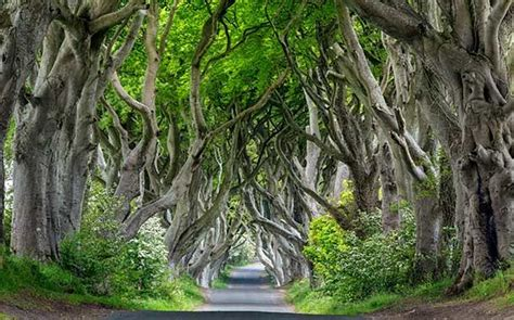 Tree Netting Ireland by 6 Most Beautiful Tree Tunnels In The World