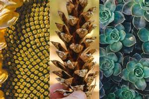 Golden Section In Nature by How Fibonacci And The Golden Ratio Can Make Your Garden